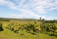 Ruta del Vino Monterrei