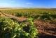 Ruta del Vino de la Garnacha