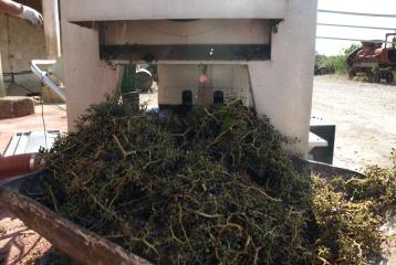 Bodegas Besalduch & Valls - Proceso de elaboración de nuestro vino