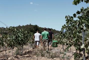 Bodegas Besalduch & Valls - Vinyas