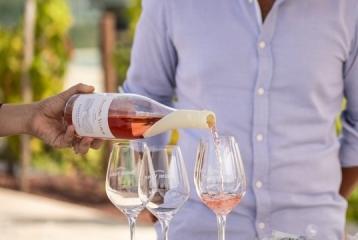 Bodegas Regina Viarum - Degustación de vinos