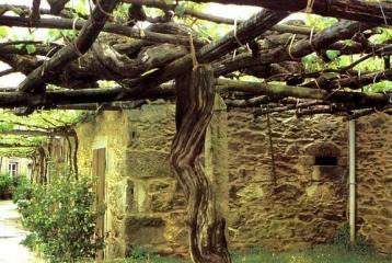 Pazo de Galegos - Cepa 400 años