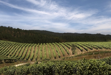 Ruta del Vino Ribera del Guadiana - Ruta del Vino Ribera del Guadiana