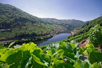 Bodega Vía Romana - Vistas viñedos río