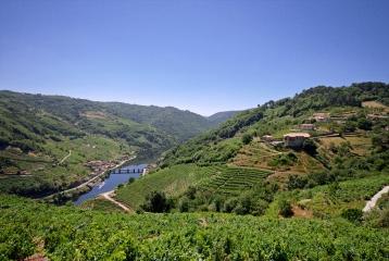 Bodega Vía Romana - Vistas río Miño