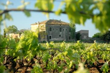 Hotel Castell de Gimenelles - Vista de la masia entre los viñedos