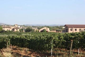 Bodegas y Viñedos Barón d'Alba - Viñedos