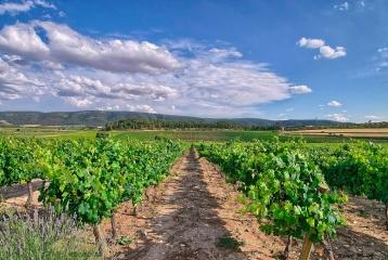 Finca Santa Elena - Paisajes viñas