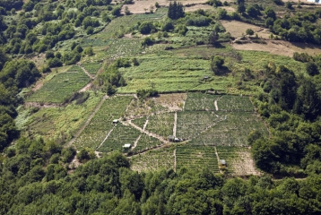 Ruta del Vino de Cangas