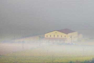 Bodegas Torrevellisca - La bodega en niebla
