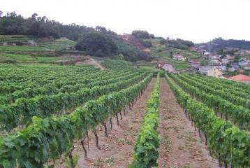 Ruta del Vino de Ribeiro - Ruta del Vino de Ribeiro