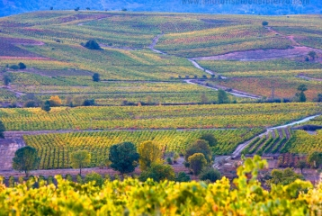Bierzo Enoturismo - Ruta del Vino de El Bierzo
