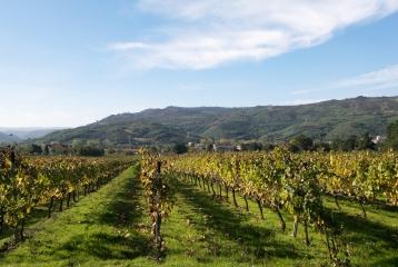 Ruta del Vino Monterrei - Ruta del Vino Monterrei