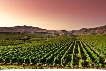 Ruta del Vino de Yecla - Ruta del Vino de Yecla