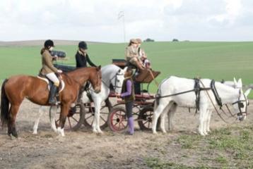 MaridaJerez Agencia viajes - Paseo en carro con caballos