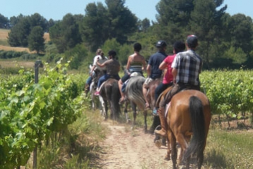 MaridaJerez Agencia viajes - Paseo con caballos entre viñedos