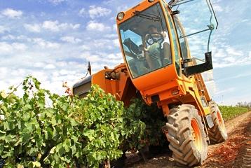 Ruta del Vino de la Garnacha - Ruta del Vino de la Garnacha. Vendimia