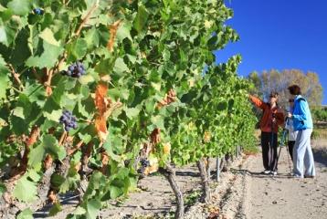 Ruta del Vino de la Garnacha - Ruta del Vino de la Garnacha. Naturaleza