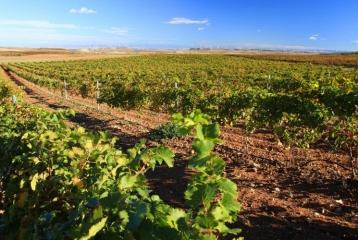 Ruta del Vino de la Garnacha. Paisaje