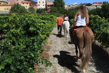 Ruta del Vino de la Garnacha - Ruta del Vino de la Garnacha. Turismo activo
