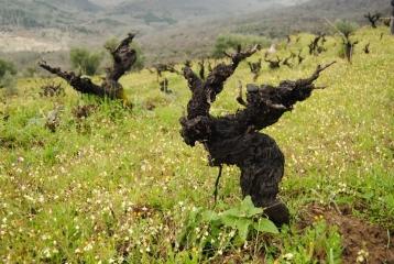 Bodegas Cámbrico - Viña