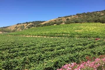 Bodegas Morosanto - Vistas de los viñedos