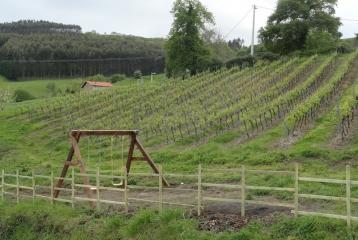 Bodega y Casa Rural Vidular - Viñedos