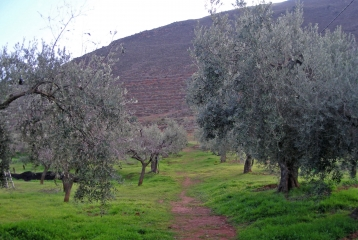 Cortijo el Cura Eco-bodega - Olivos