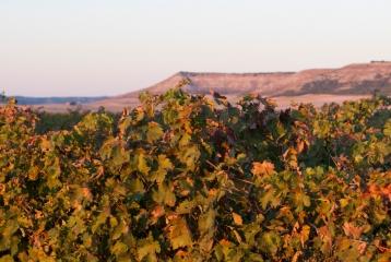 Bodegas y Hospedería Concejo - Viñedos