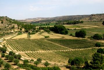 Bodegas Ignacio Guallart de Viala - Viñas