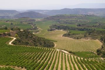 Bodegas López Oria - Nuestros viñedos, cuidados con mimo generación tras generación, son nuestro mayor tesoro.