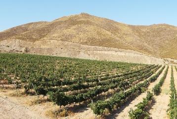 Bodegas Bolabana - Viñedos Almería. Vino de Adra.