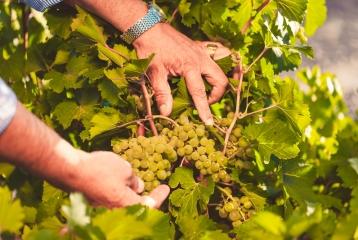 Bodega Javier Sanz Viticultor -
