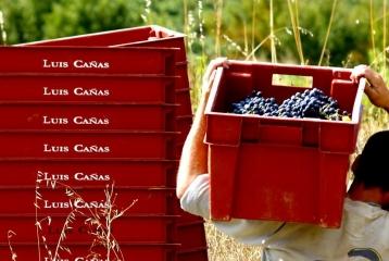 Bodega Luis Cañas - Vendimia en cajas