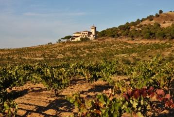 Bodegas y Viñedos Estancia Piedra -
