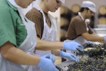 Bodegas Luzón - Seleccion manual de la uva