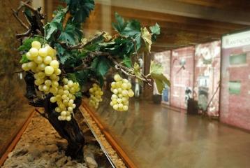 Museo del Vino de Peñafiel -