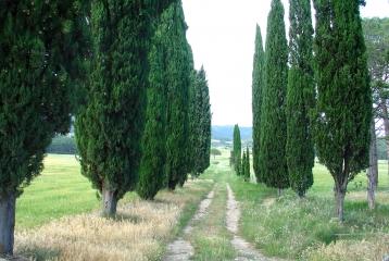 Hacienda El Ternero - Acceso principal S. XV.