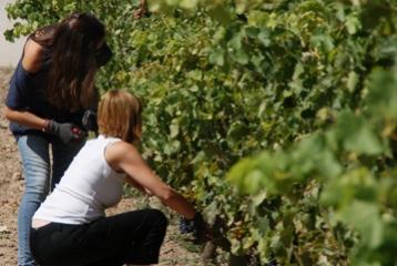 Bodega - Museo del Vino Emina Ribera - Experiencias