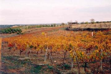 Bodega y viñedos Gosálbez Orti - Campo