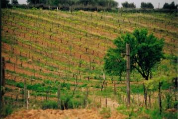 Bodega y viñedos Gosálbez Orti - Vides