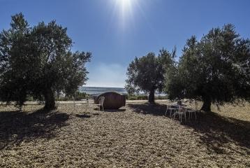 Bodega Cyan - Terraza Cyan