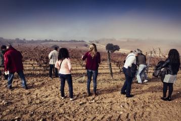 Bodega Cyan - Visita al los viñedos