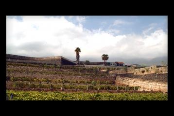 Vista panorámica del viñedo.