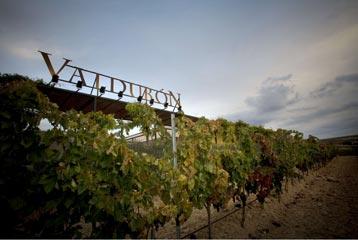 Bodegas Valdubón - Detalle de viñedo