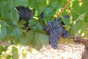 Bodegas Gordonzello - Nuestras Viñas