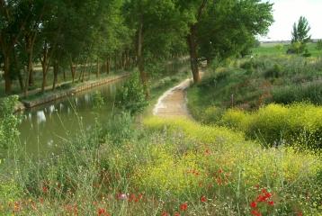 Quinta del Canal - Camino junto al Canal de Castilla