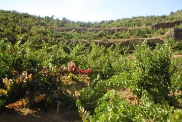 Bodegas Valdeáguila - Viñas de Valdeaguila