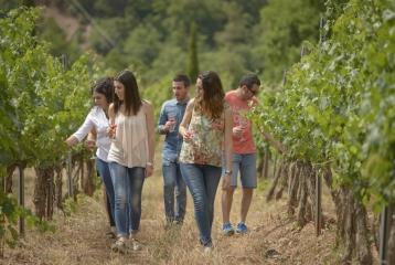 Actividades en el viñedo
