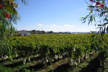 Bodegas y Viñedos Heretat de Cesilia - Viñedos